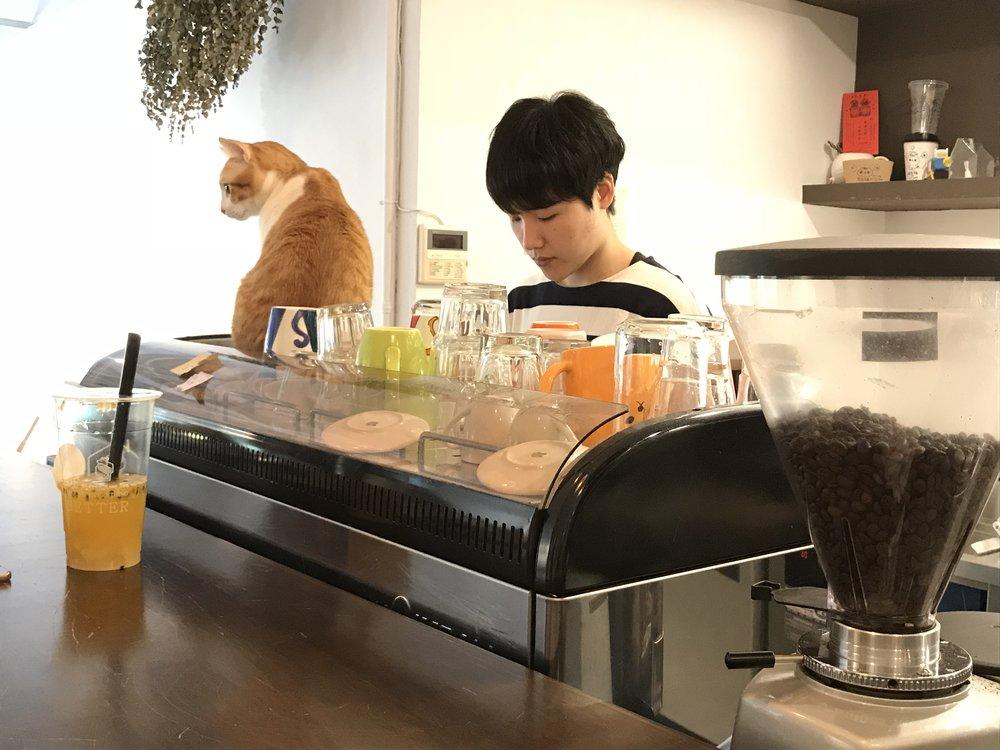 Cat JPG-06.jpg