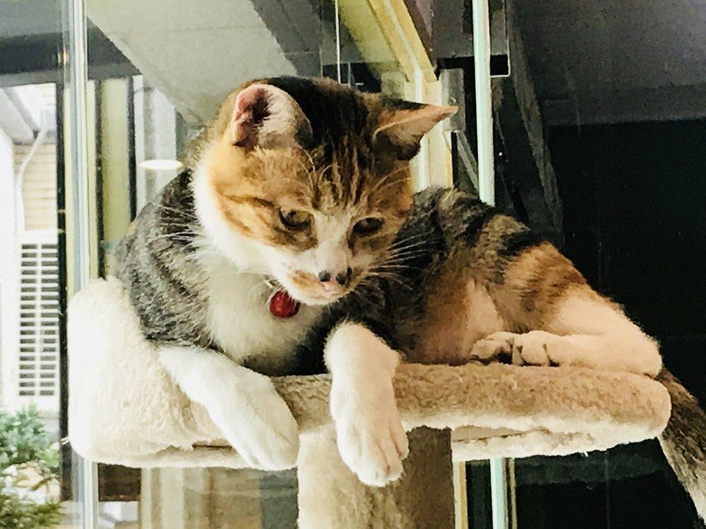 Kitty Chengi -19.jpg