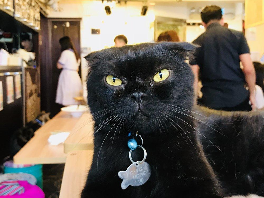 Meow Mi Home-51.jpg