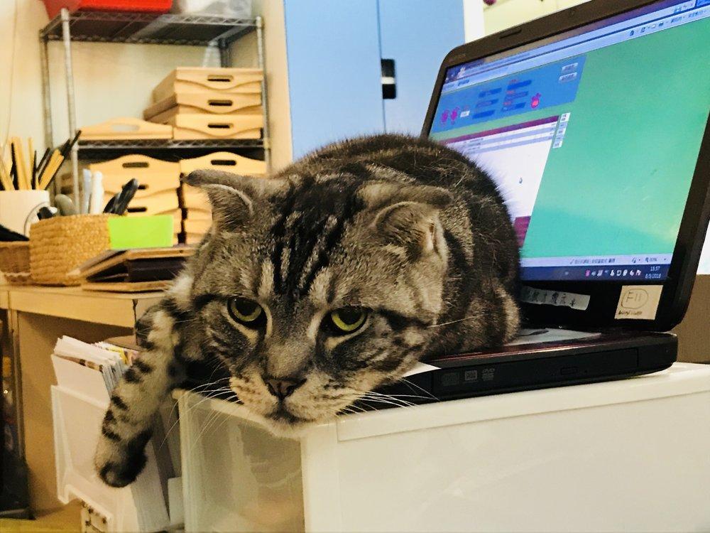 Cat Store-17.jpg
