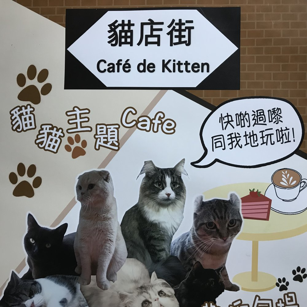 Cafe de Kitten   Hong Kong