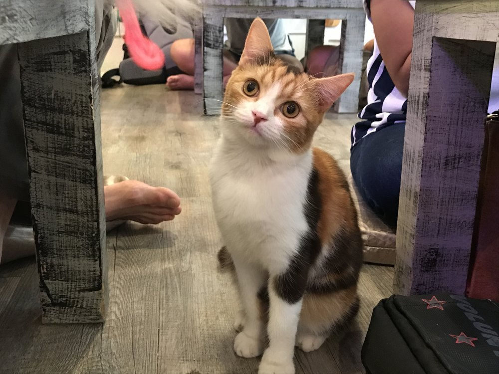 In Conclusion, Caturday Is A Cat Cafe Dream Come True And One Of The Best  Iu0027ve Come Across. It Might Even Be Worth The Trip To Bangkok Just For This  Place ...
