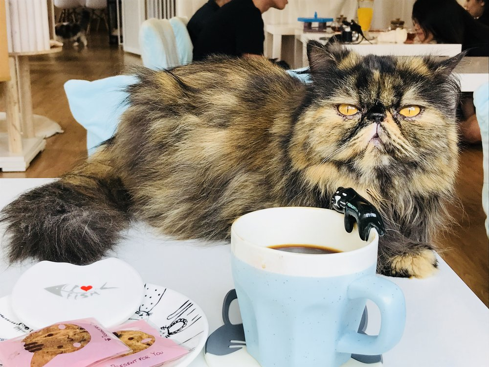 The Cats Tea Room-60.jpg