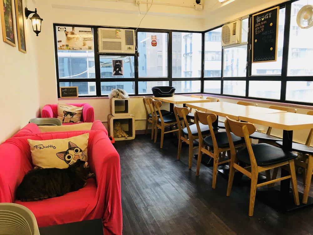 Cafe de Kitten-03.jpg