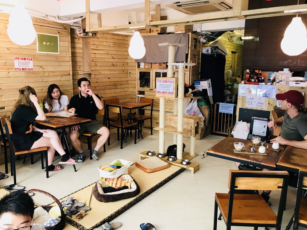 Mr and Mrs Cat Cafe-50.jpg
