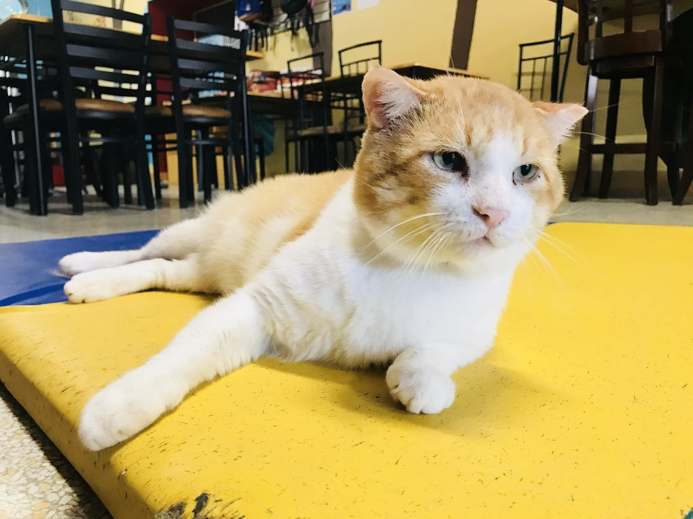 CatCafeMad-18 copy.jpg