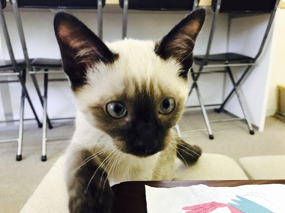 CatsEye-21.jpg