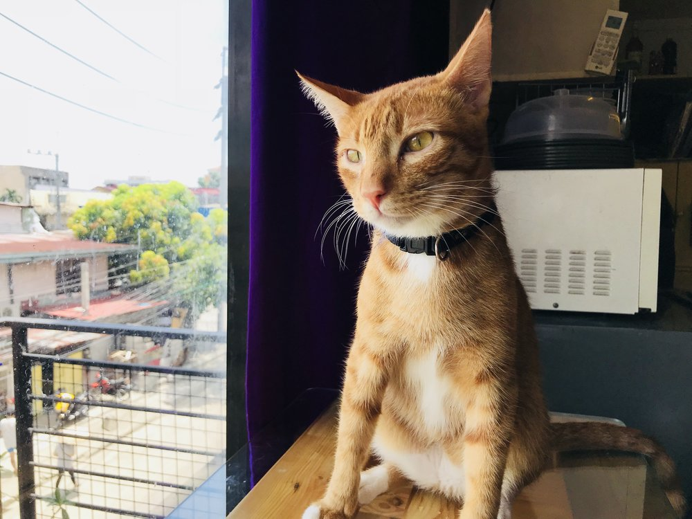 CatCafeManila-02.jpg