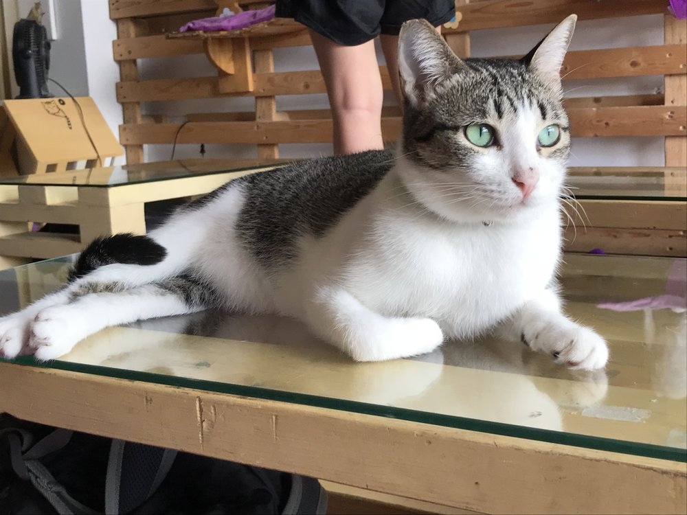 CatCafeManila-21.jpg
