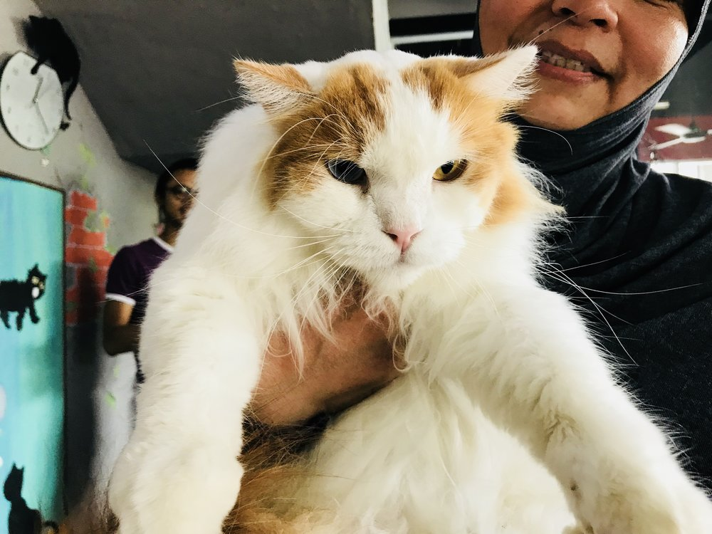 Megat is a rescue cat!