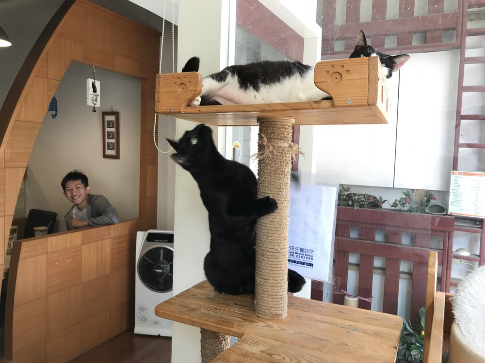 (AT) cats tea-26.jpg
