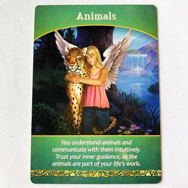 Your card today is about connecting with animals. You have a strong connection to them whether they are your pets or birds in the park. Your angels want to remind you of the healing and joy you can receive from them and the happiness you give to them in return. It's a good idea to spend a little extra time with your pets, or with other animals in your life. You will both thrive from it.✨✨✨Reading from Life Purpose Oracle Cards