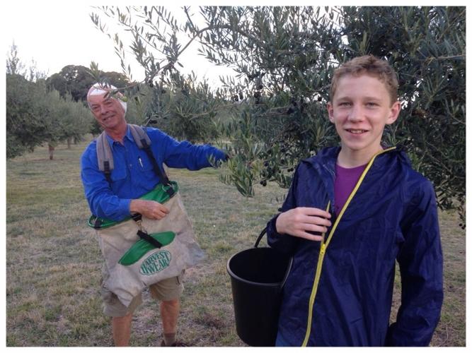 Marraweeny Olives - 1 of 72 (7).jpg