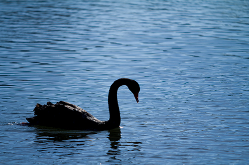 Black Swans - As popularised by N.N. Taleb, building on the work of Karl Popper, is often simplified and used to represent high impact, unpredicted events.