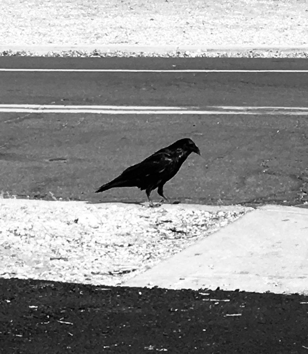 raven noir.jpg