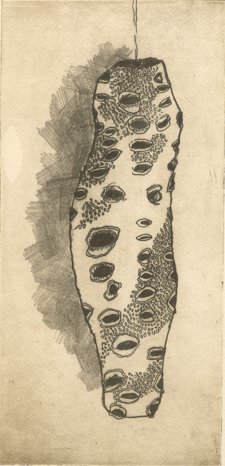 banksia_nut-solar_plate_etching