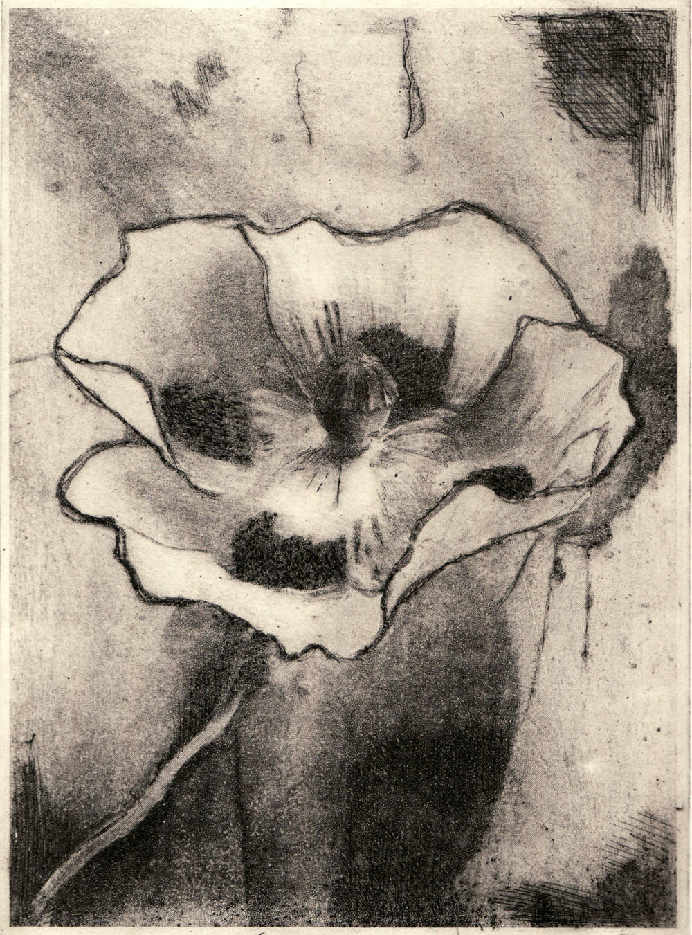 poppy-solar_plate_etching