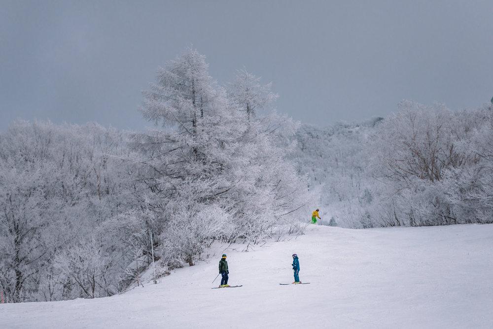 Zao Onsen Ski Slopes