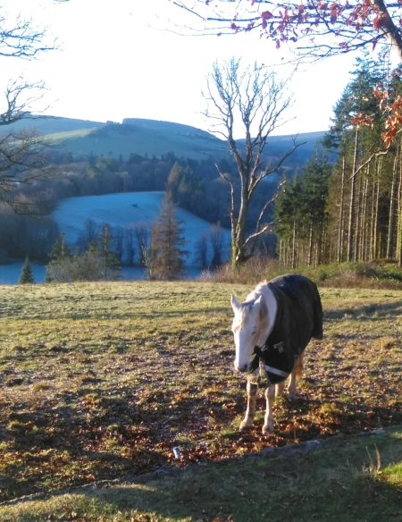 White horse- Powerscourt Estate