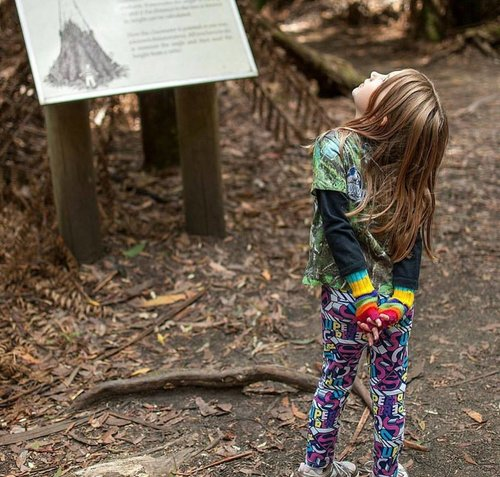Mt Field National Park. Image shared by Instagram/happiness_is_homeschool