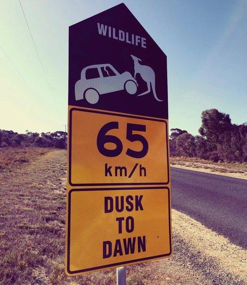 Wildlife hours.