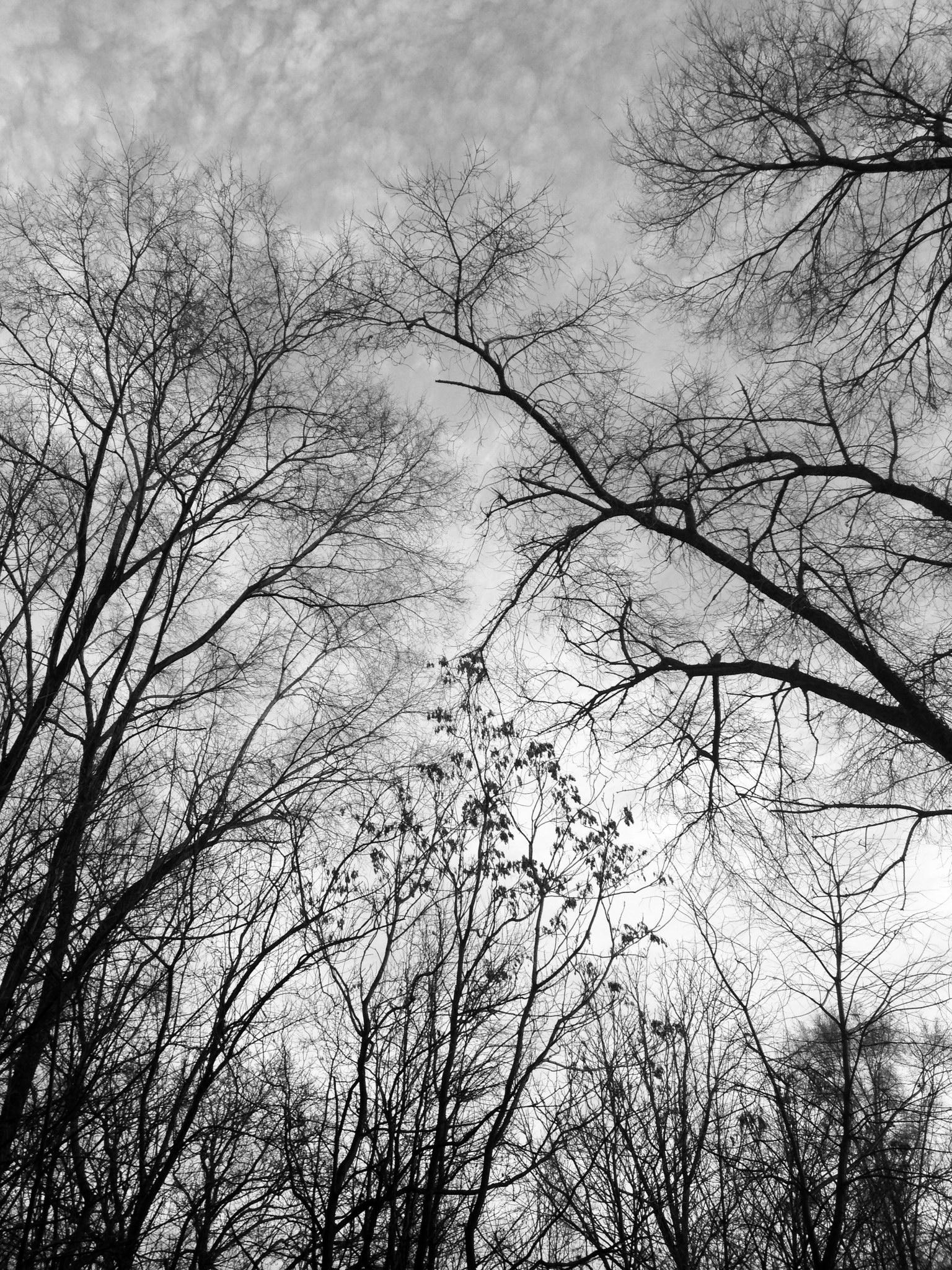 bare tree 2