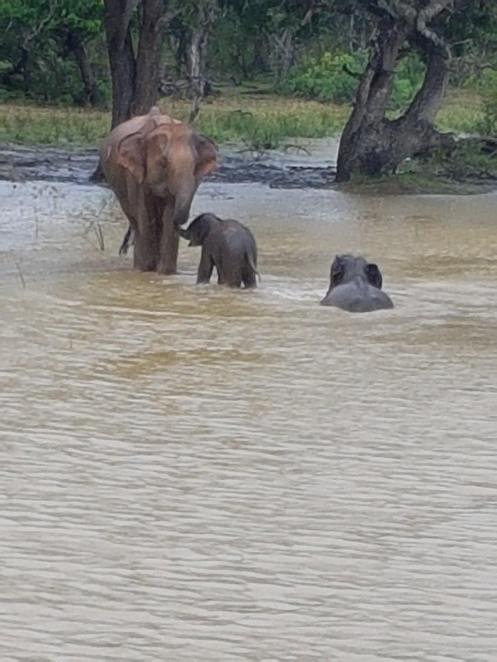 elephants bathing.jpg