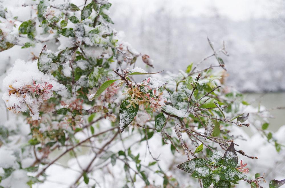 winterwonderland_janinabourosu20.jpg