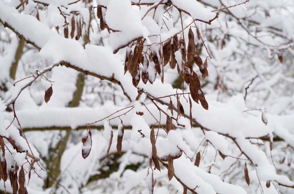 winterwonderland_janinabourosu22.jpg
