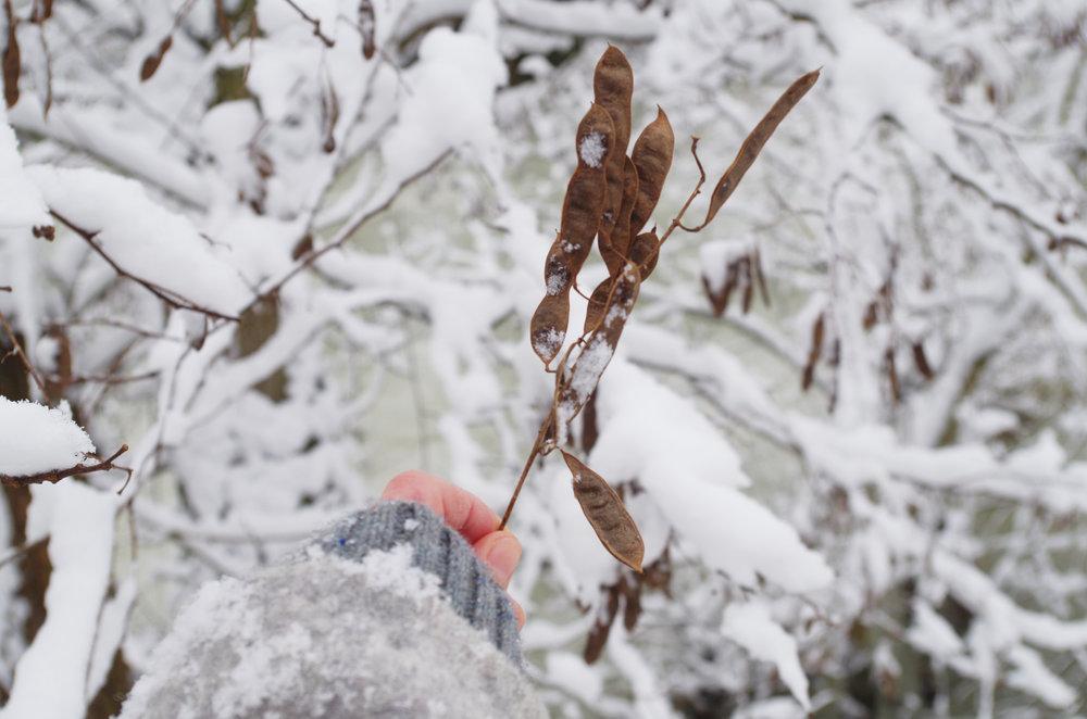 winterwonderland_janinabourosu25.jpg