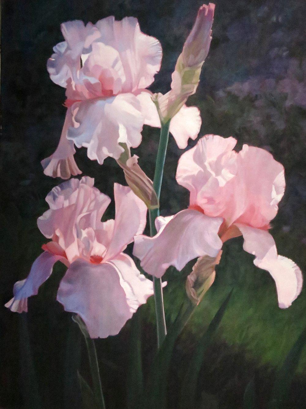 Three Pink Irises,  40 x 30, oil