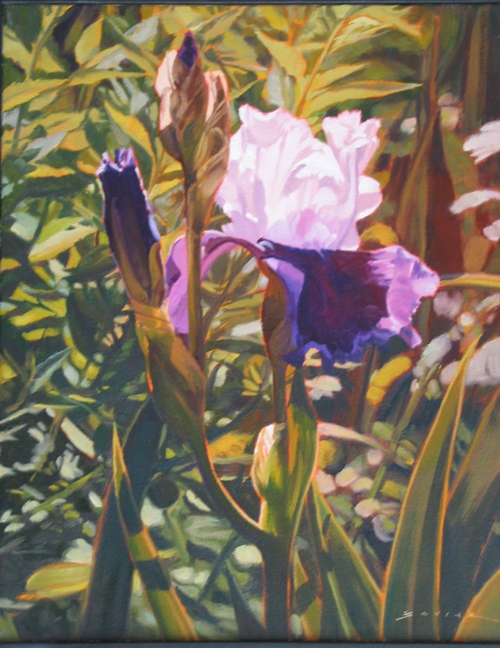 Iris, 20 x 16, oil