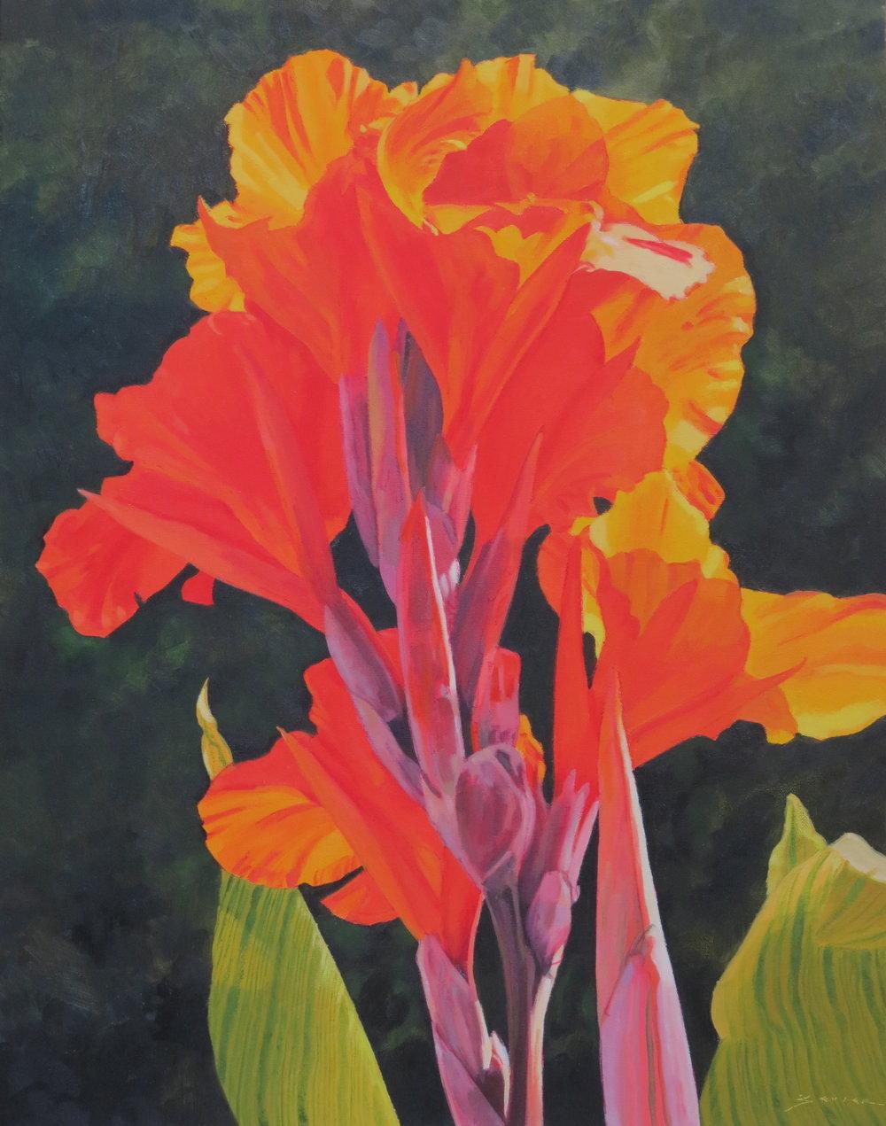 Red Calla Lily,  22 x 28, oil