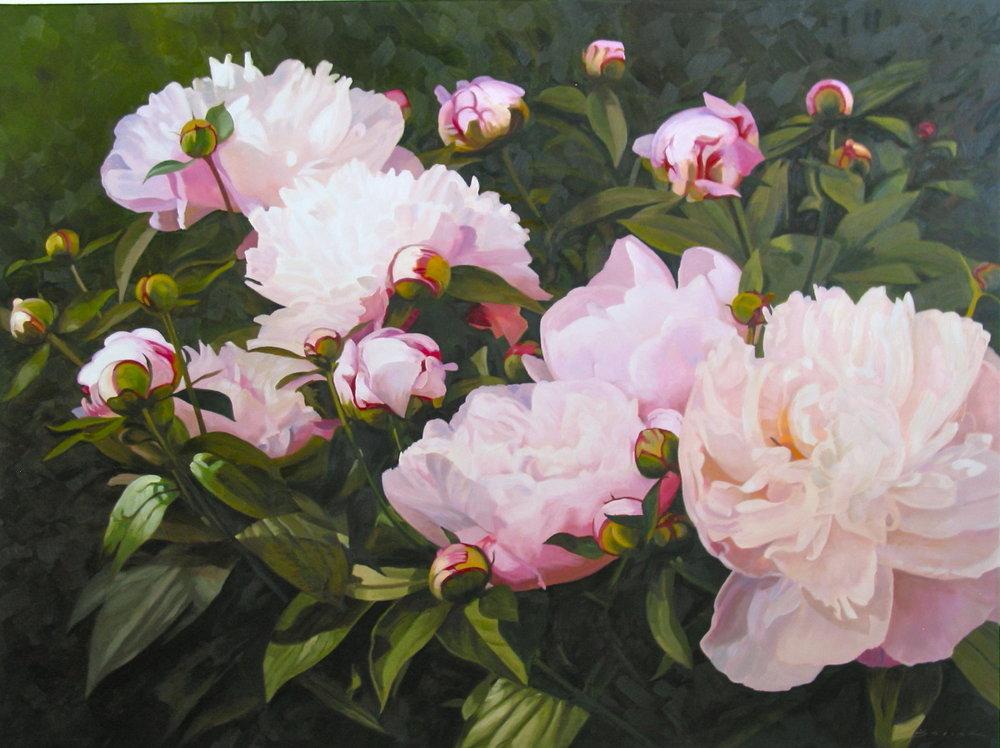 Pink Peonies #2,  36 x 48, oil