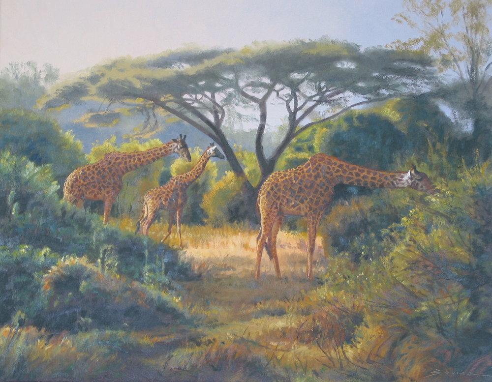 Giraffes/Masai Mara Kenya, 16 x 20, oil