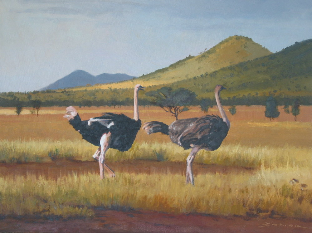 Ostrich/Edge of the Serengeti Tanzania, 12 x 16