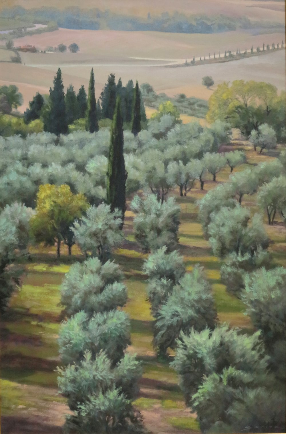 Olive Grove Assisi/Tuscany, 24 x 36
