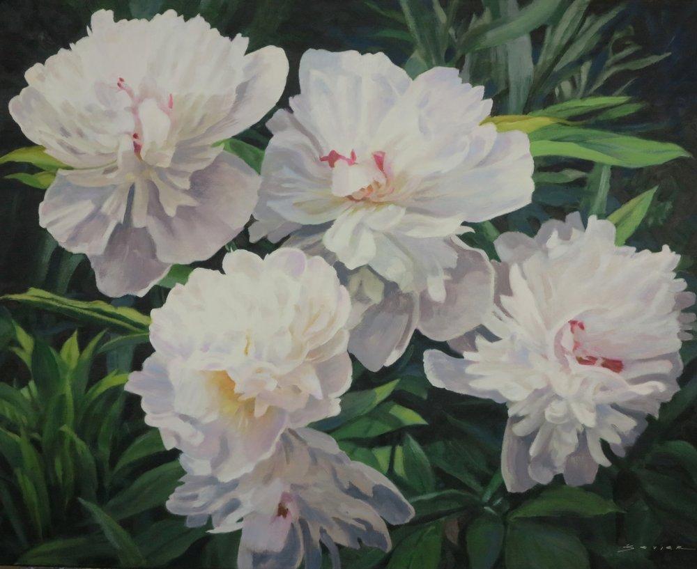 White Peonies,  Butchard Gardens,  24 x 30, oil