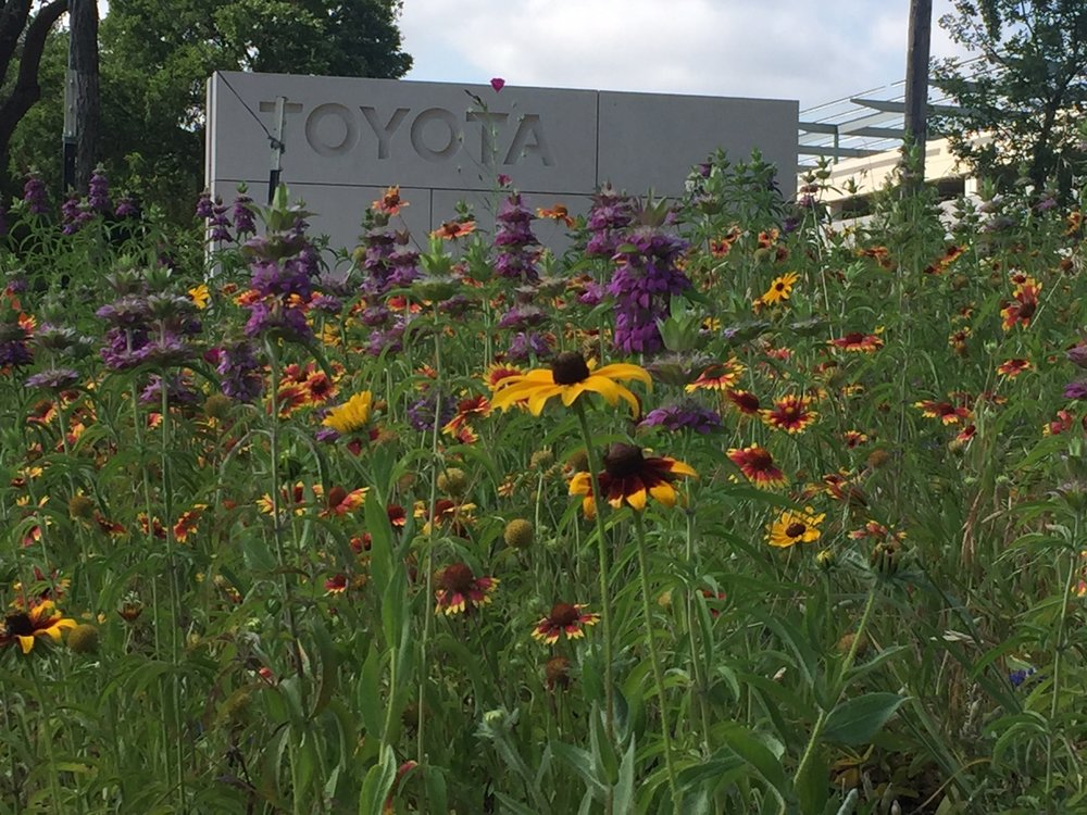 Toyota wildflowers.jpg