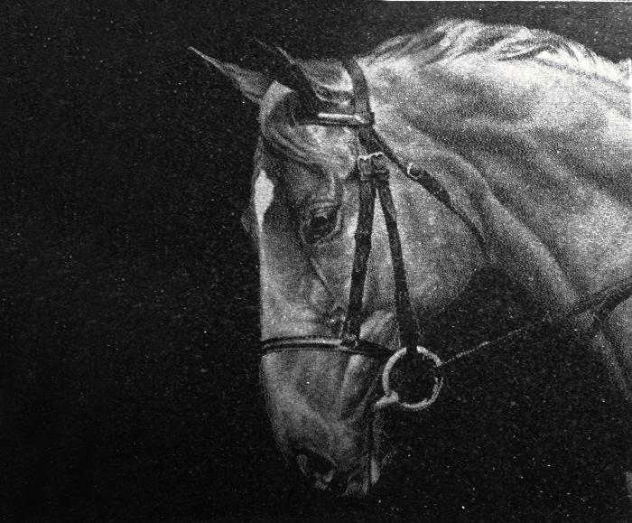 fotogravur-pferd-auf-stein.jpg