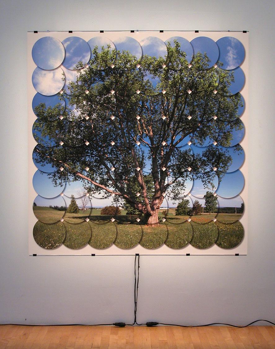 Arbre (Tree), 2002