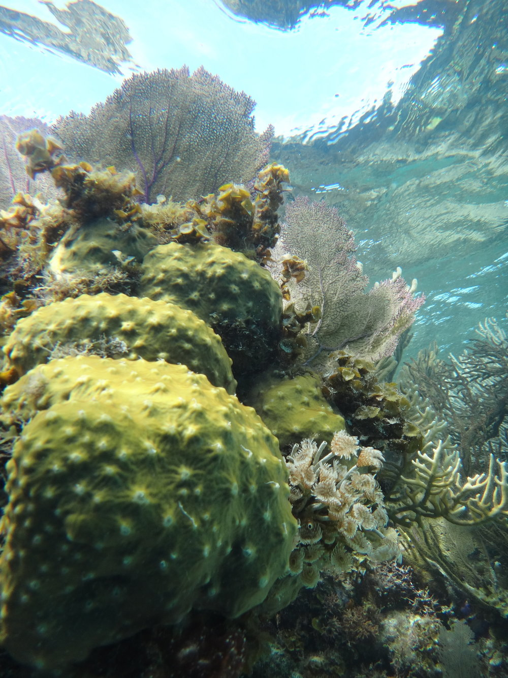 Belize Corals & Worms by Kenna Reed '18