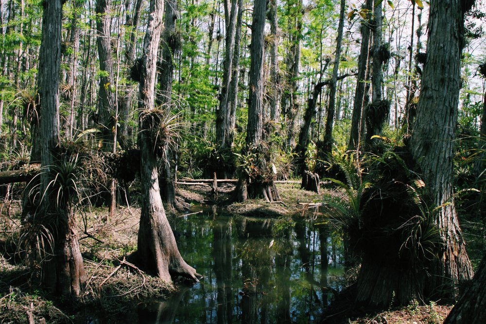 Sydnie Collins '20 - Cypress Swamp