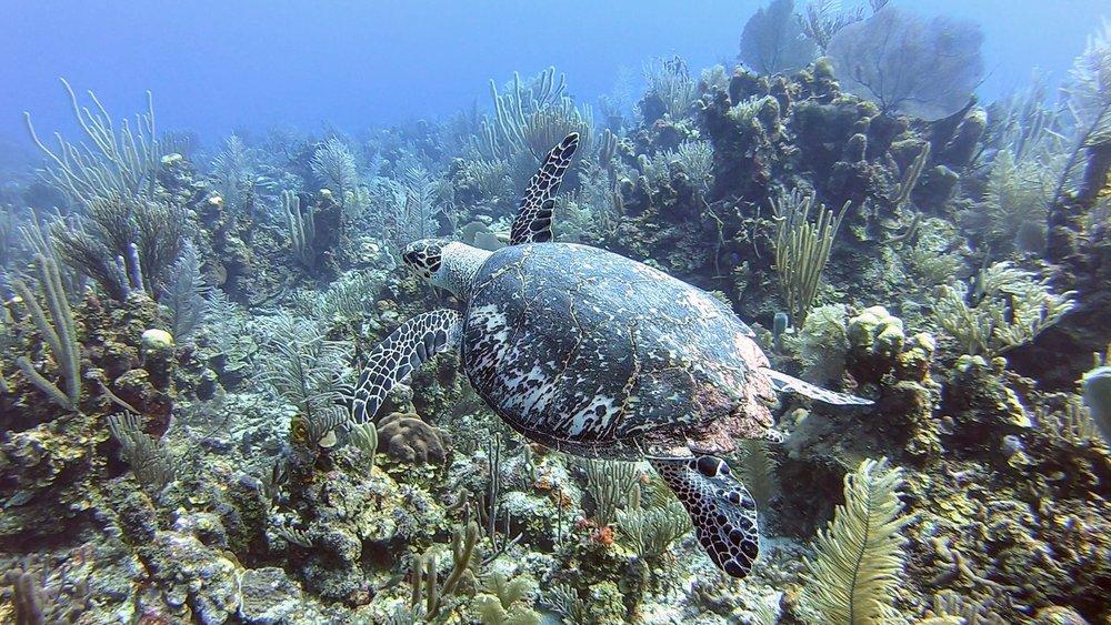 Brandon Rose '21 - Belizean Reef Life pt 3