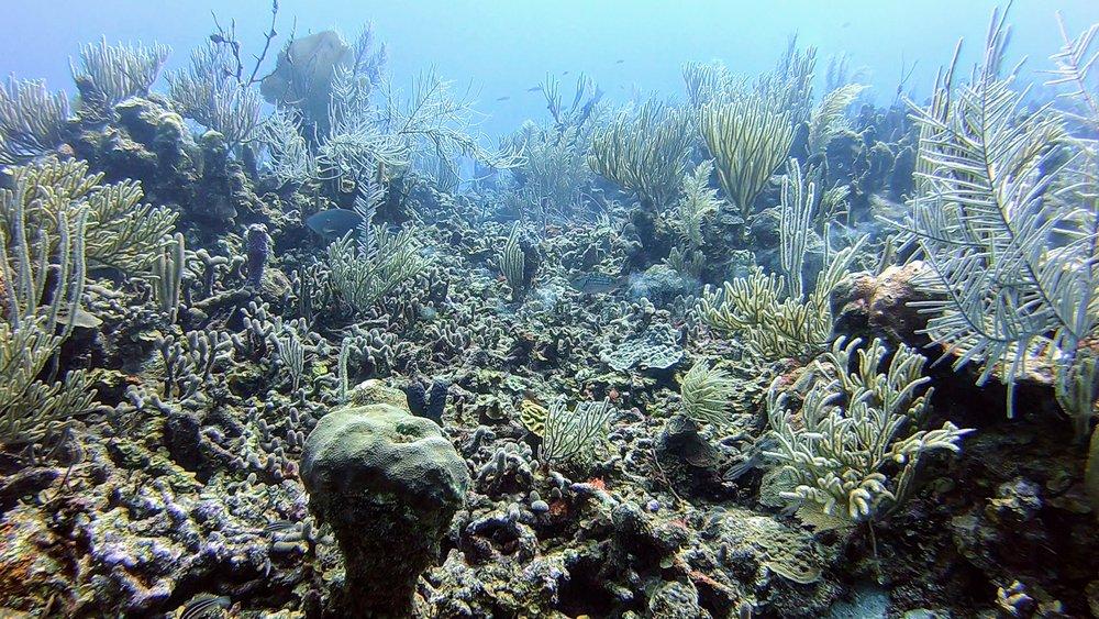 Brandon Rose '21 - Belizean Reef Life pt 2
