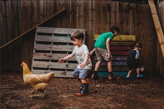Nothing like good chicken chasin'. Do you think he caught him?? #lonecone  Photo By Brand Ambassador: @Alygraphs . . . . . . . #theoutdoorchild #runwildmychild #wilderness_kids #theartofchildhood #our_everyday_moments #thehonestlens #pk_dirty #the_beautiful_real #clickinmoms  #childrenseemagic #p52clicks #hellostoryteller #100daysofsummer #dearphotographer #thesugarjar #theartfulchicken #lonecone #honestly_hands