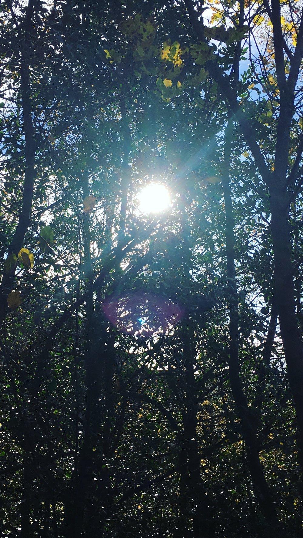 E. SUN & TREES.JPG