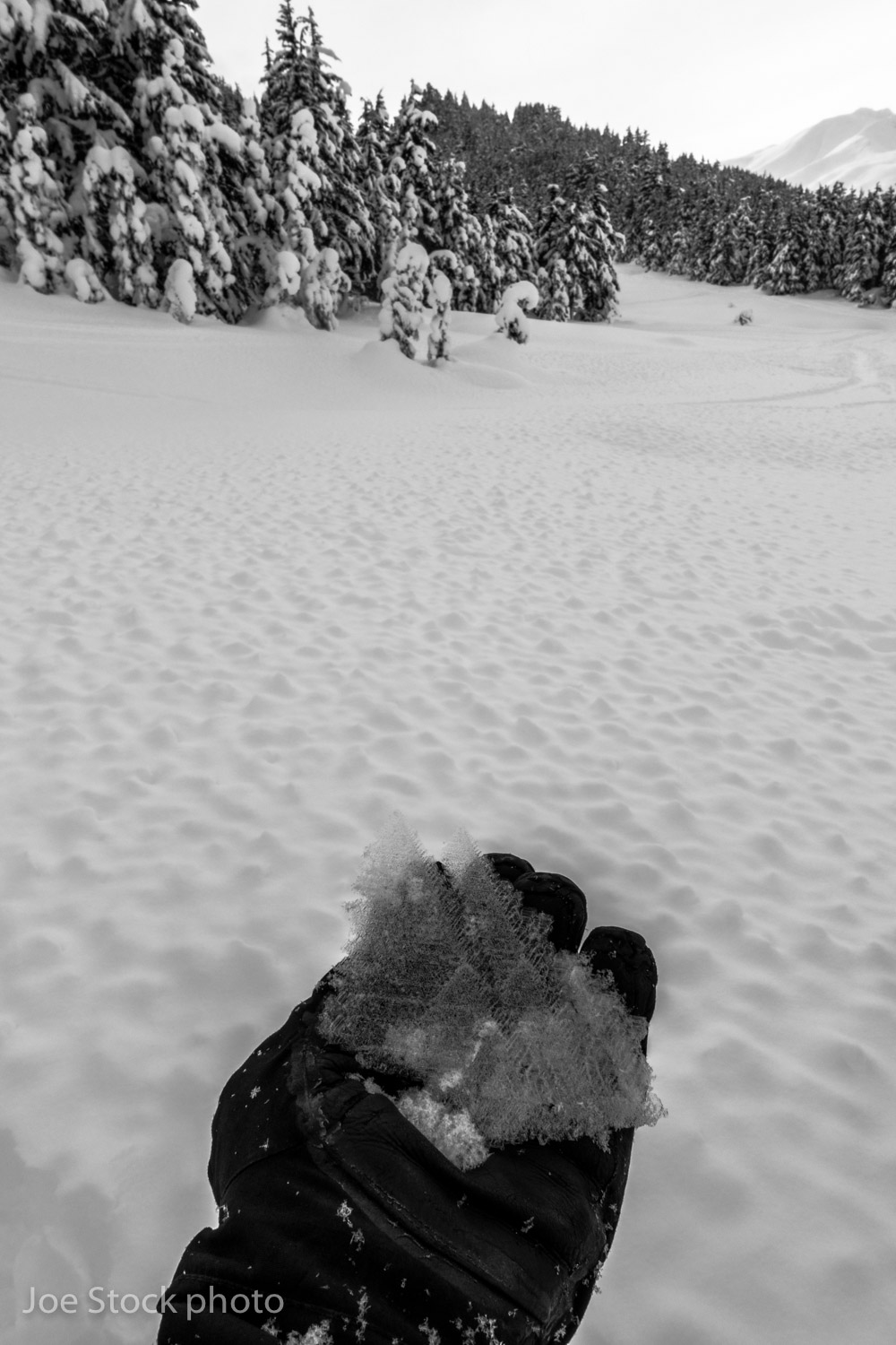 An inch of snow hides a meadow of massive surface hoar in the Tincan Meadows. This was during 10 days of avalanche training with the 212th Pararescue Squadron in Anchorage.