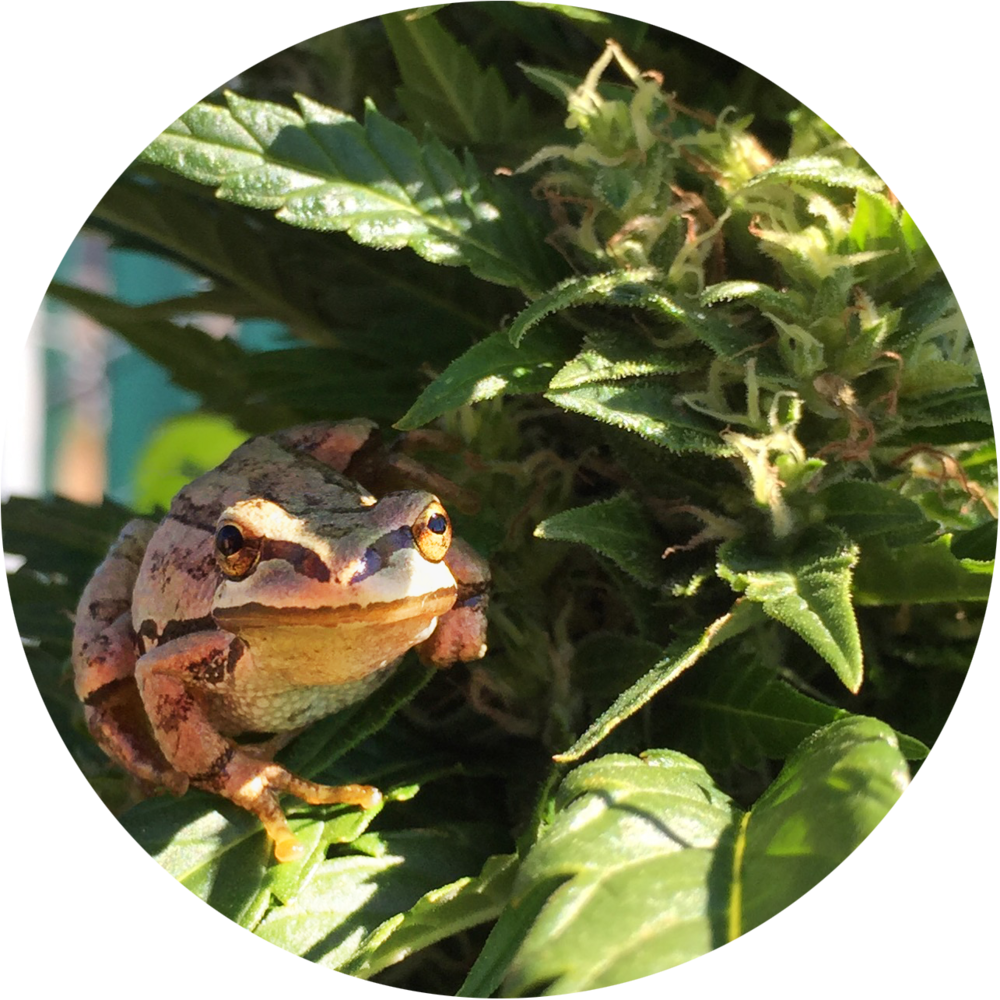 green_island_growers_frog.png