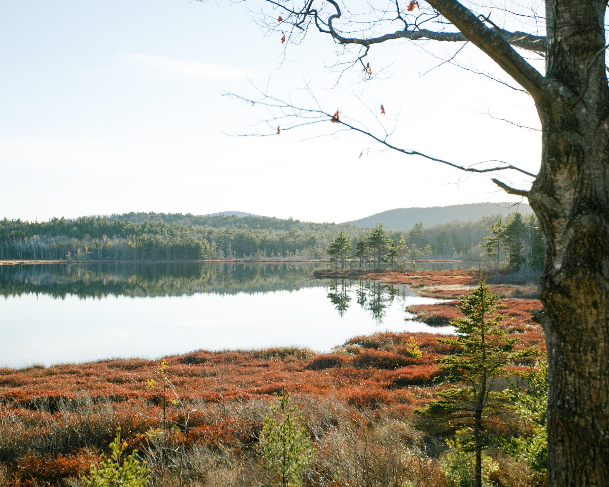 Acadia-8